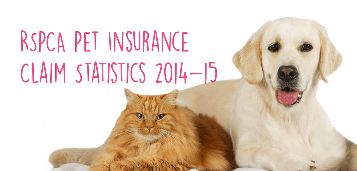 pet insurance claim statistics by rspca pet insurance   fy