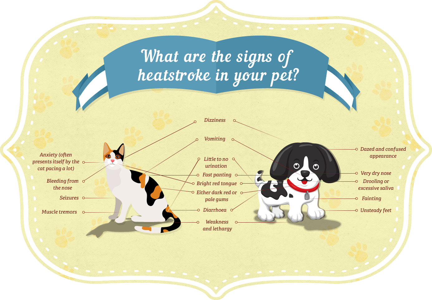 What are the signs of heatstroke in your pet?
