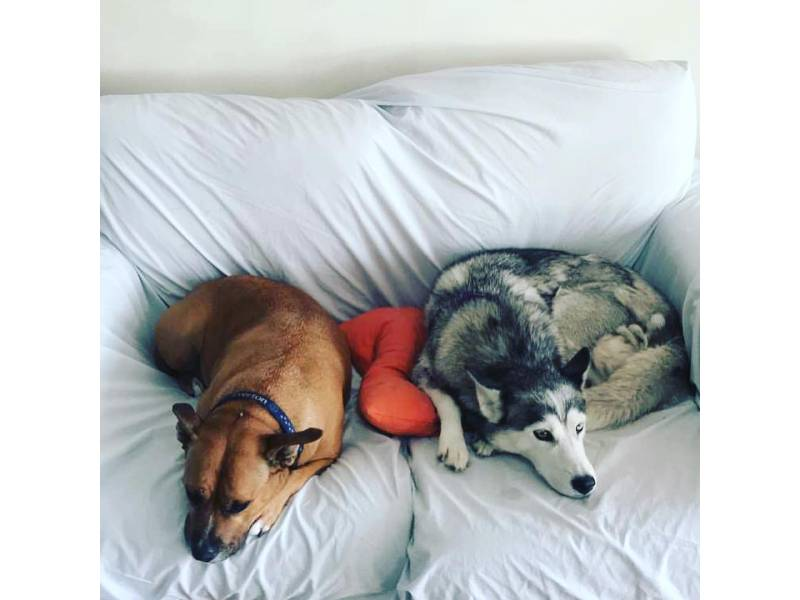 adopted dogs lying on bed