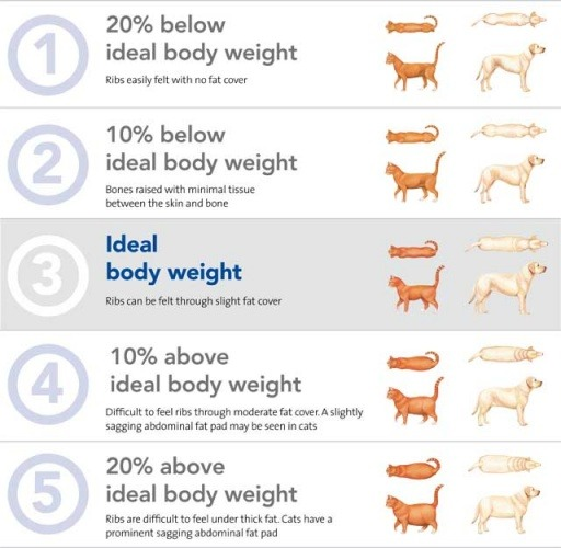 ideal dog weight