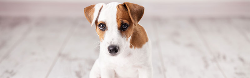 A guide to toilet training your puppy