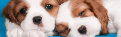 Food basics for new puppies