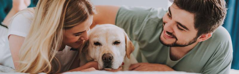 How To Make An Older Dog Feel At Home After Adopting Them Rspca Pet Insurance