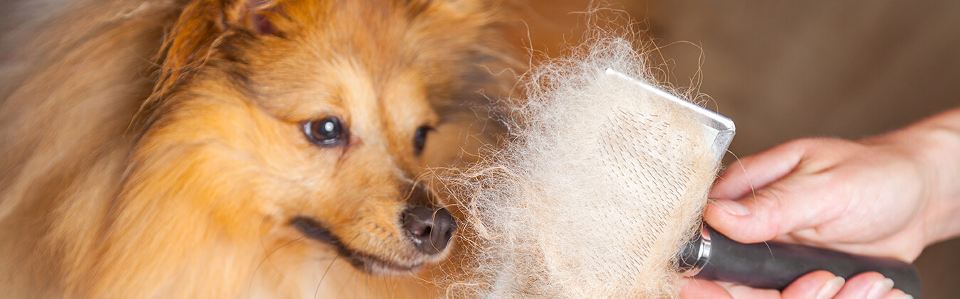 Everything You Need To Know About Dog Shedding Rspca Pet Insurance