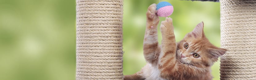 Cat Toys And Potential Dangers Rspca Pet Insurance