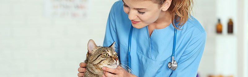 Ultimate guide to pet vaccinations | RSPCA Pet Insurance