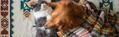 How to keep pets warm in winter: Can a change in seasons affect them?