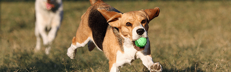 All About Bones And Your Dog Rspca Pet Insurance
