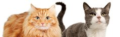 Essential cat care information from RSPCA Pet Insurance