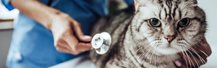 Common reasons why cats have to visit the vet