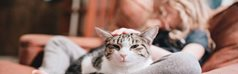 Tips to help your indoor cat get enough exercise
