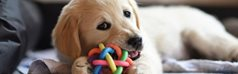 Myth busting: Teething for your puppy