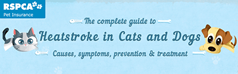 The complete guide to Heatstroke in Cats and Dogs