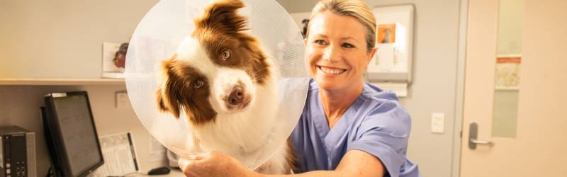 How Much Does It Cost To Visit A Vet | RSPCA Pet Insurance